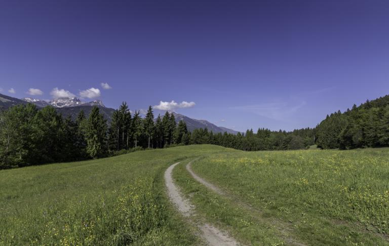 Wald, Wiesen und Wanderwege