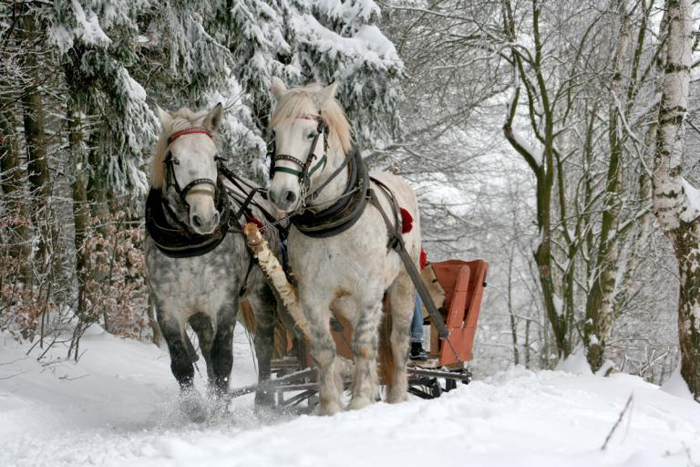 Pferdeschlittenromantik